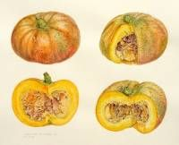 Labyrinthe de courge 1. watercolour 55 x 75 cm. 2006.  » Click to zoom ->