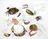 Crabs, lobsters and shrimps of Sark. Watercoulor and pencil 40 x 50 cm. ANF Sark project 2011.  » Click to zoom ->
